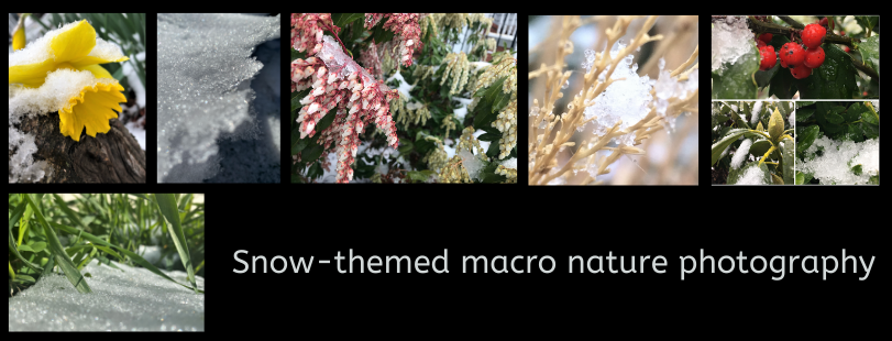 Collage of snow-themed macro nature photography depicting ice and snow on grass, berries, flowers and bushes
